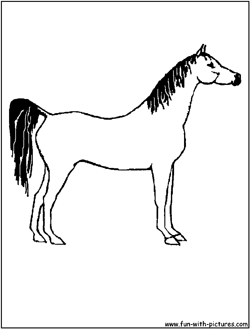 Arabian Horse Pictures To Color