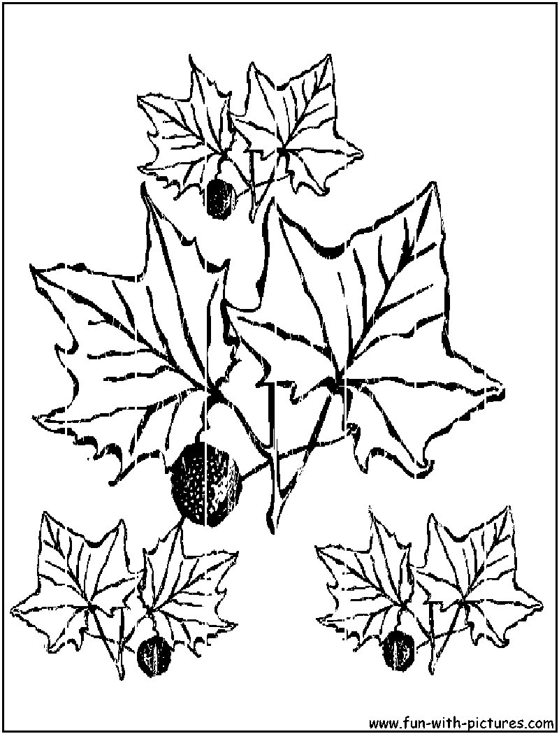 Autumn Leaves Coloring Pages - Free Printable Colouring Pages for ...