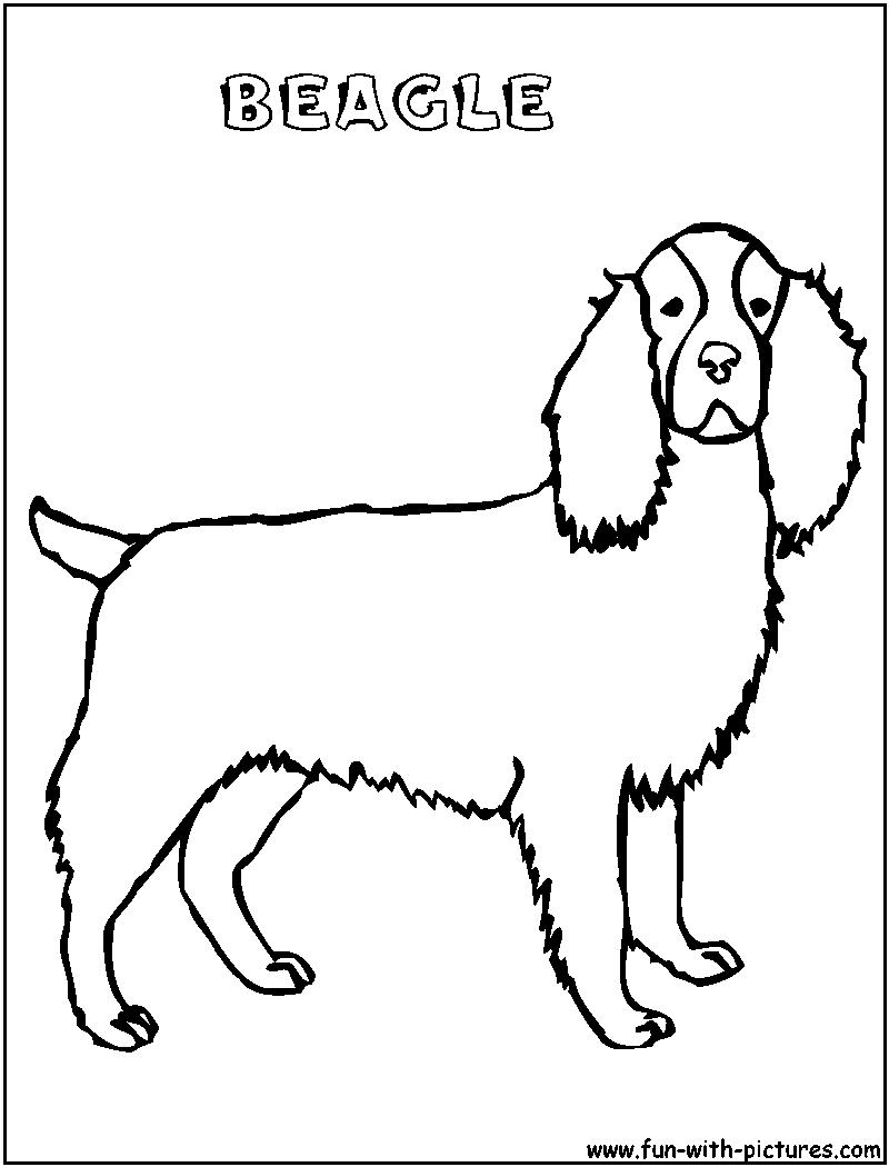Beagle Coloring Page