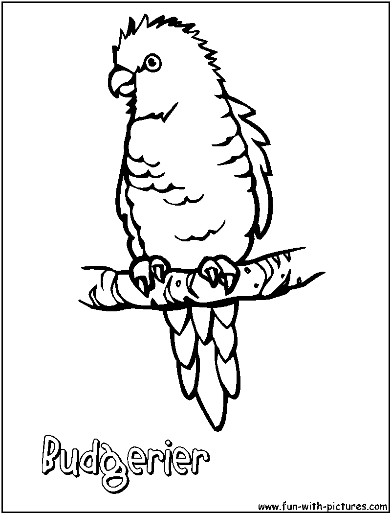 parrots coloring pages free printable colouring pages for kids