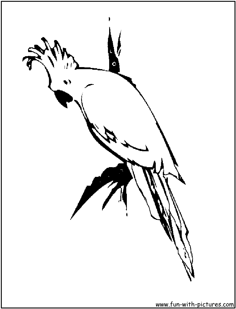 Pet Animals Coloring Pages Cockatoo Page