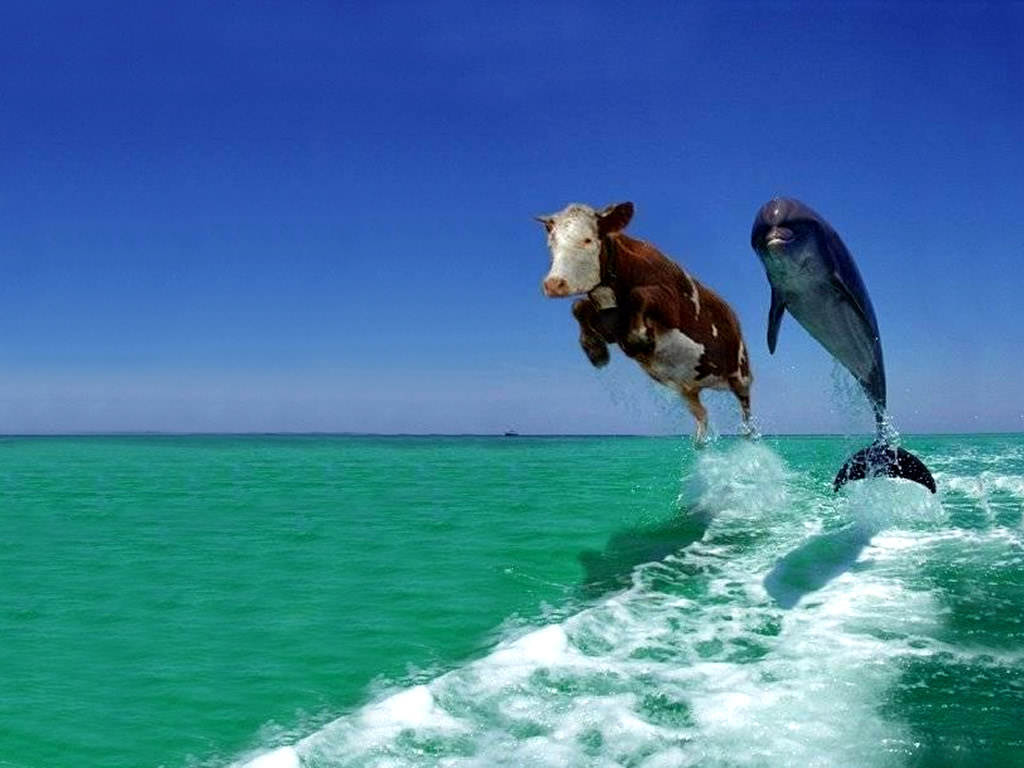 Funny Picture - Cow Dolphin
