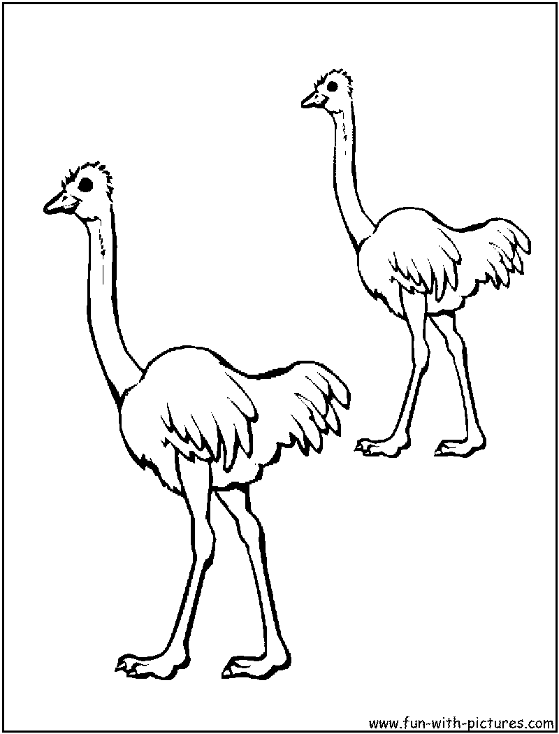 emu coloring page - Outline Pictures Of Animals For Colouring
