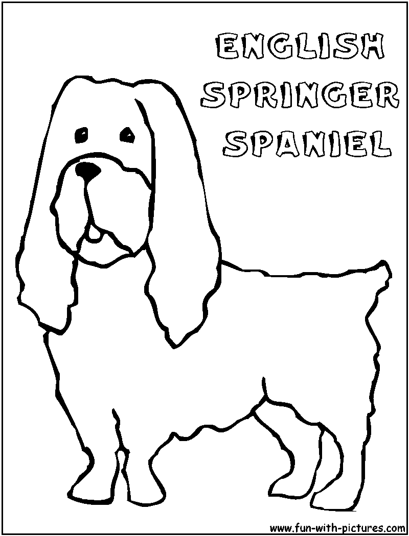 springer spaniel coloring pages - photo#7