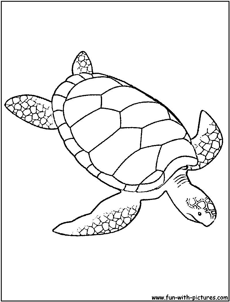 green sea turtle coloring page sea animals