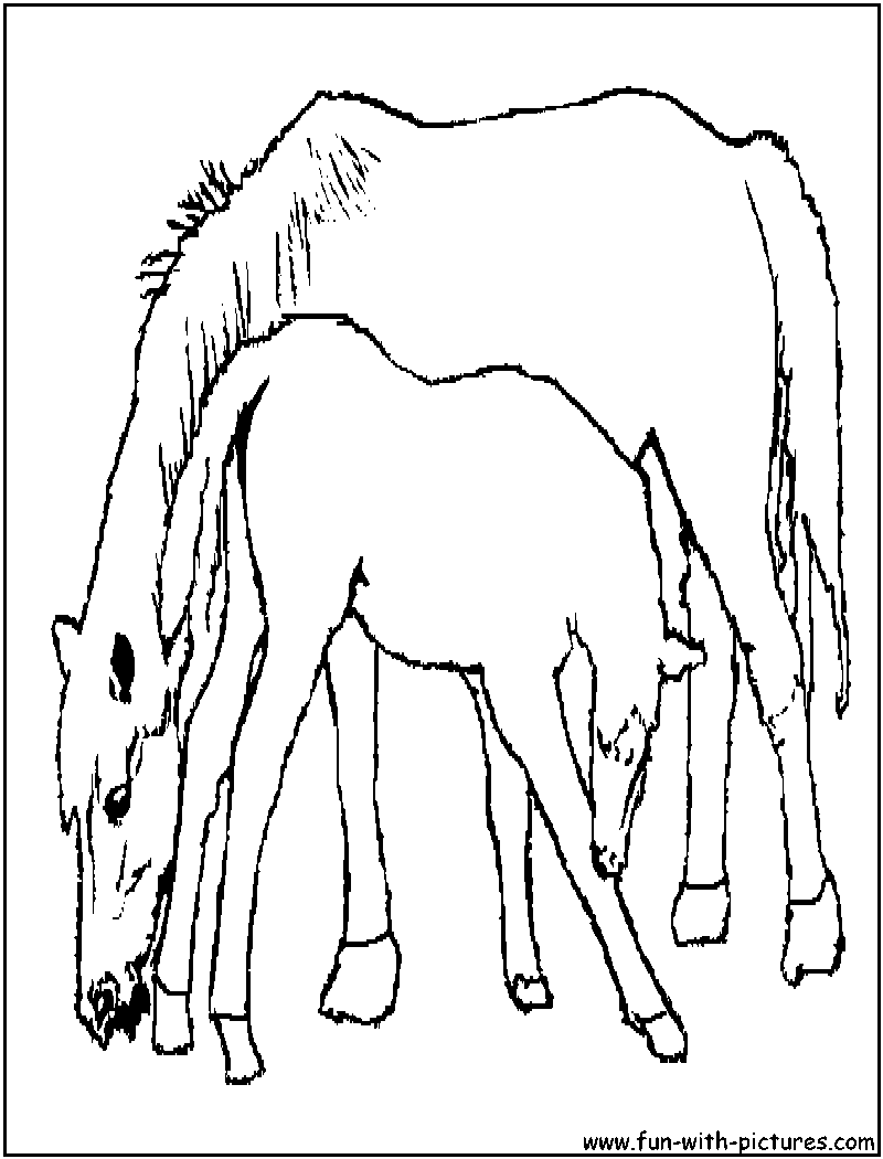 horse foal coloring page