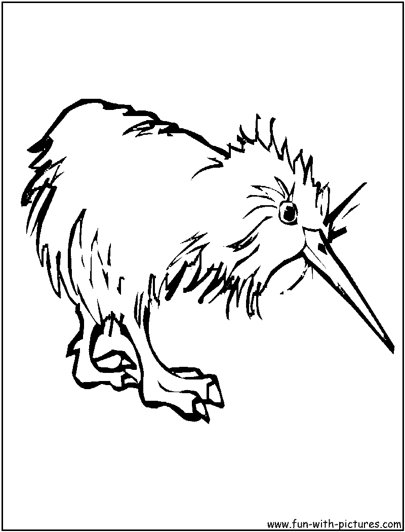 Kiwi coloring coloringpage kiwi kiwi for Kiwi bird coloring page