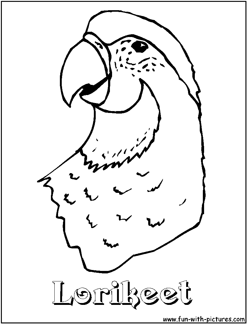 Lorikeet Bird Coloring Pages Sketch