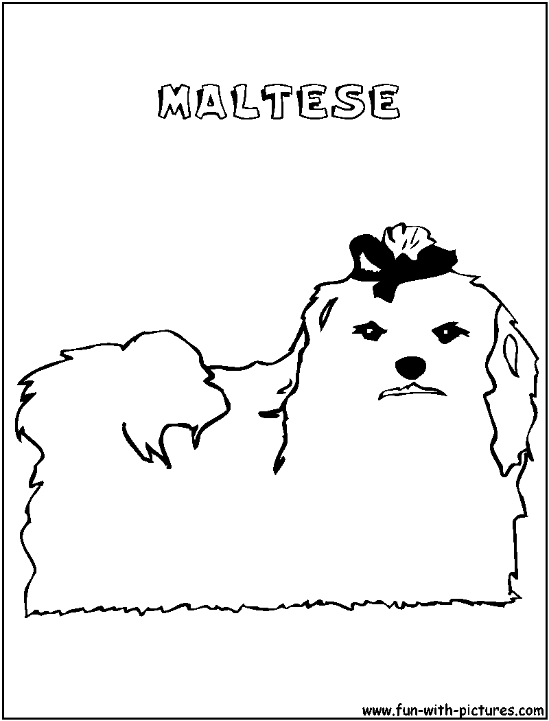 Maltese Coloring Pages Coloring