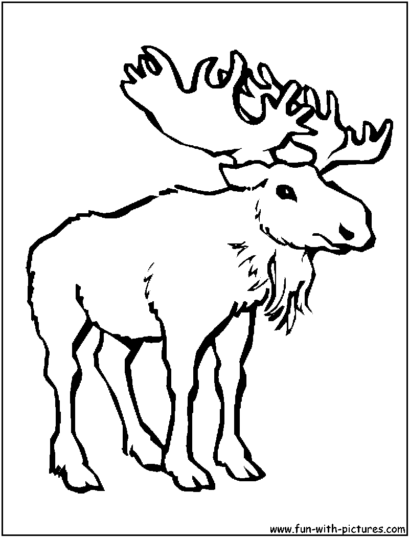 X ray coloring page - More Animals Coloring Pages