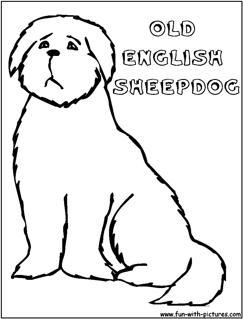 sheep dog coloring pages - photo#30