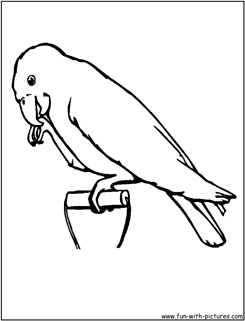 Photo Cake Image Strips Parrots