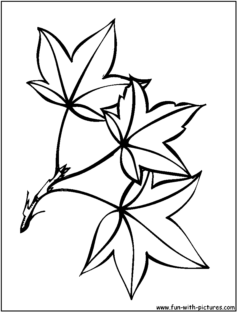 tree lea tree leaf Colouring Pages