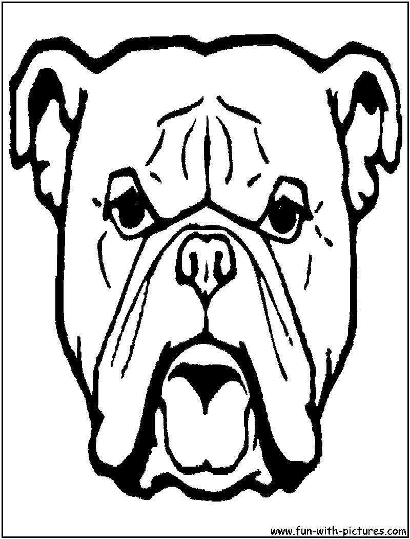 Colorea a un Boxer