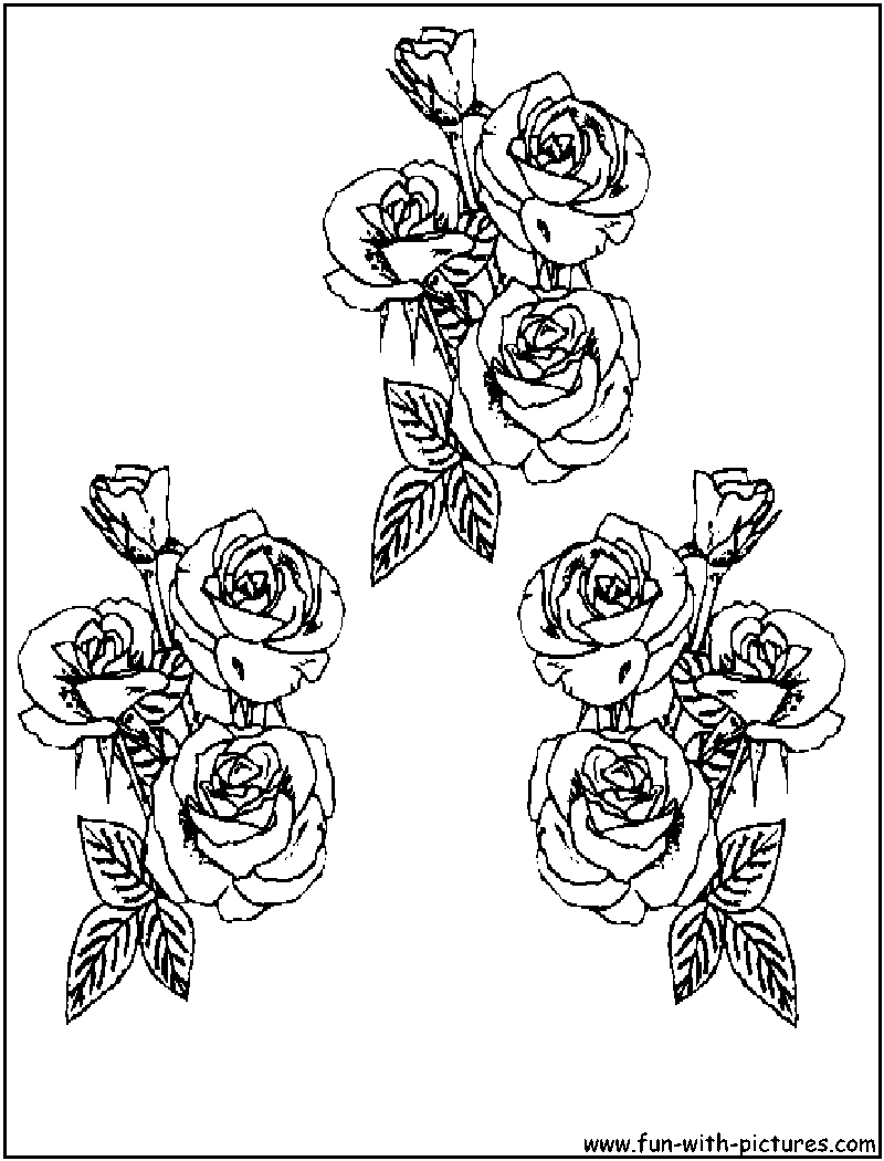 100 coloring roses pages beautiful valentine coloring pages