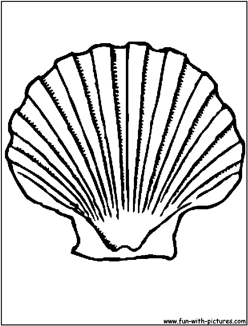 Scallop Shell Coloring Page Sketch Coloring Page