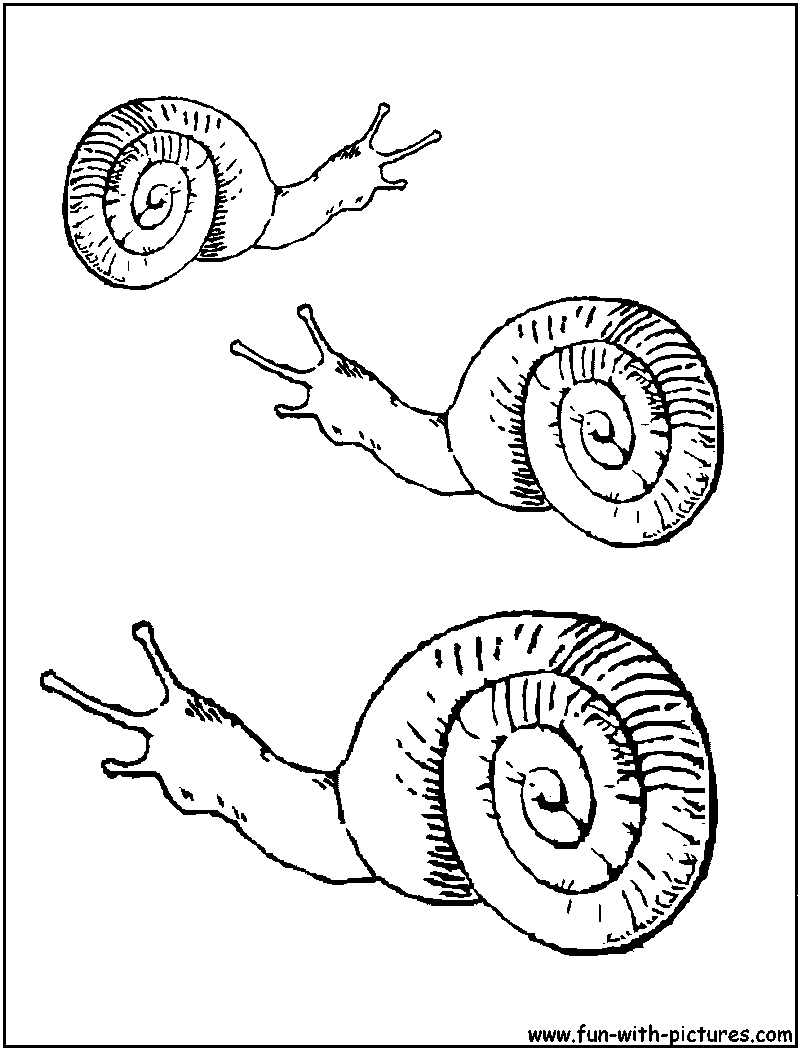 Snail life cycle free coloring pages for Sea snail coloring page