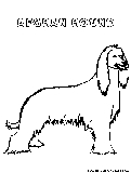 afghanhound