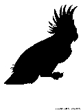 black cockatoo silhouette