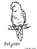 Budgerier Coloring Page