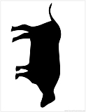 buffallo silhouette