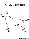 Bullterrier Coloring Page