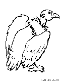Buzzard Coloring Page