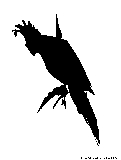 cockatoo silhouette