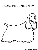 Cockerspaniel Coloring Page