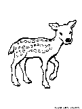 Doe Coloring Page