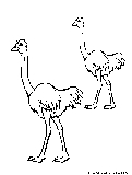Emu Coloring Page