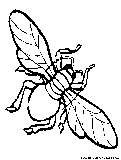 Housefly Coloring Page