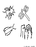 Insects Coloring Page