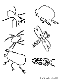 Insects2 Coloring Page
