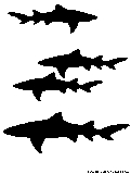 lemon shark silhouette