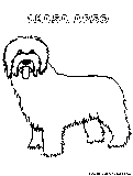 Lhasaapso Coloring Page
