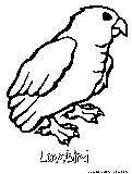Lovebird Coloring Page