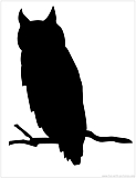 owl silhouette