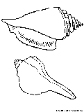 Sea Shells Coloring Page