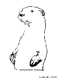 Standing Otter Coloring Page