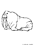 Walrus Coloring Page