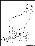 waterbuck outline