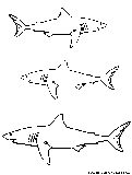 White Shark Coloring Page