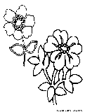WildFlower Productions:Coloring Pages - Welcome to WildFlower