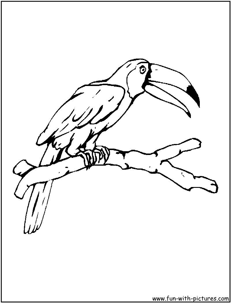 Sketch Of A Toucan Bird Coloring Pages Toucan Coloring Page