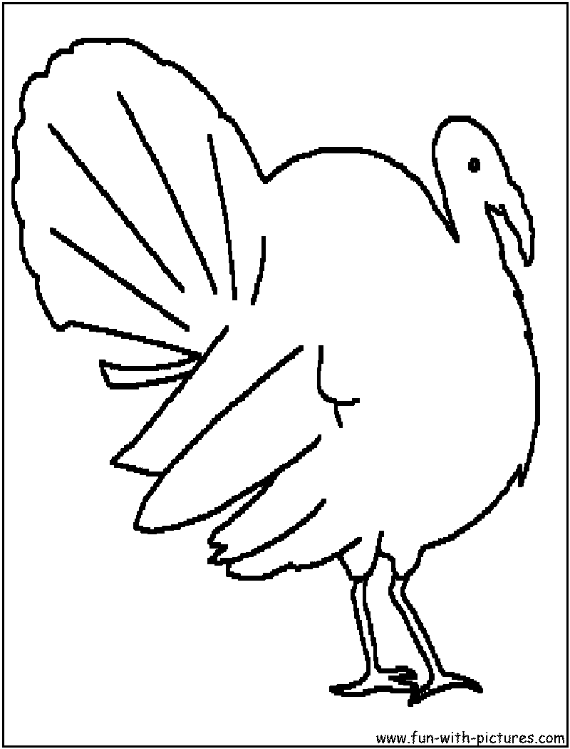 birds coloring pages free printable colouring pages for kids to