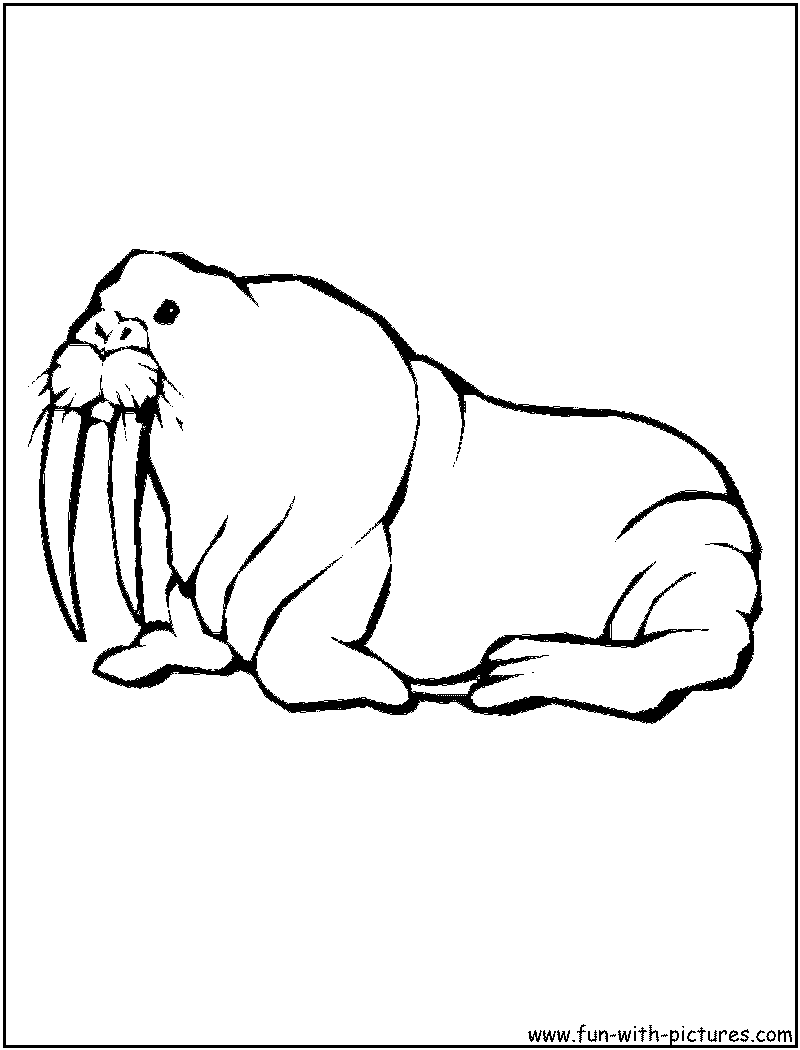 walrus coloring pages for kids - photo#40