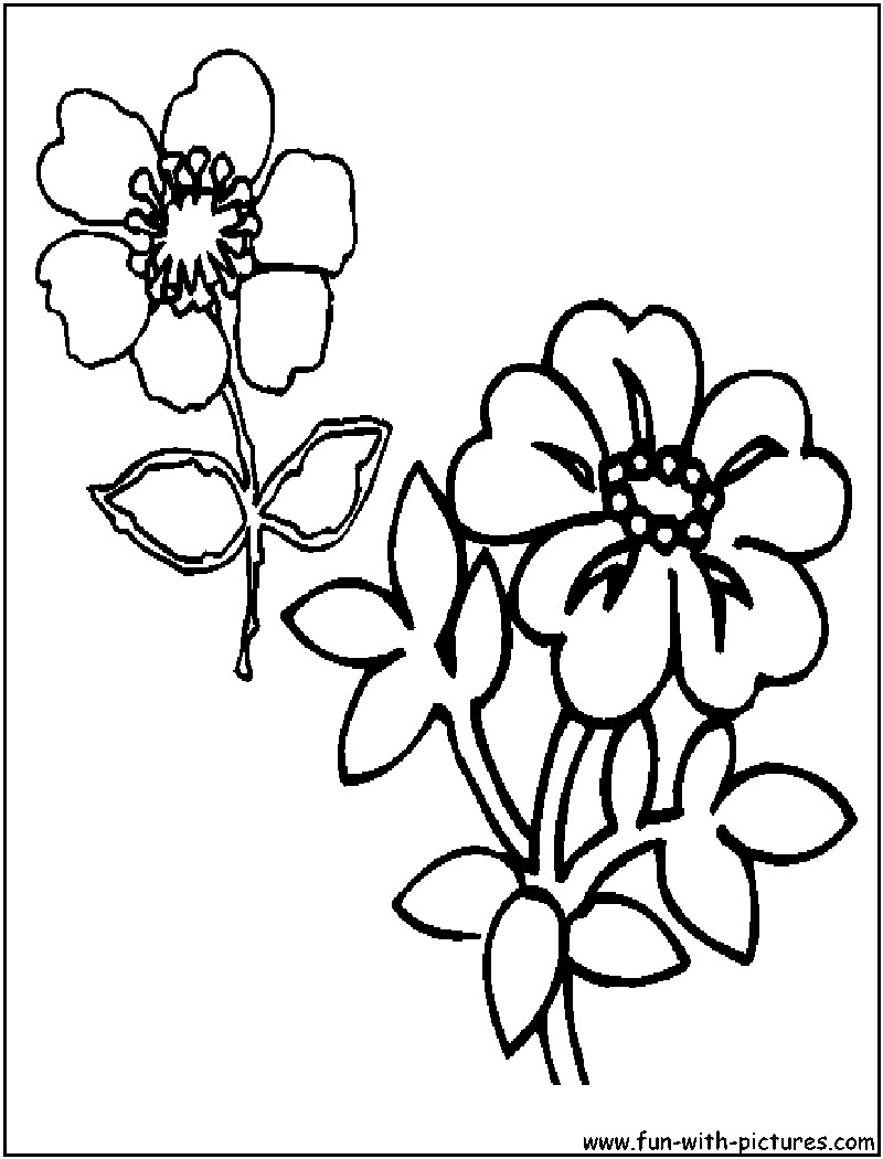Wildflowers Coloring Page