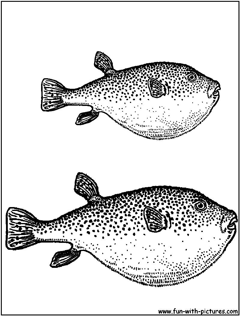swordtail fish coloring pages - photo#48