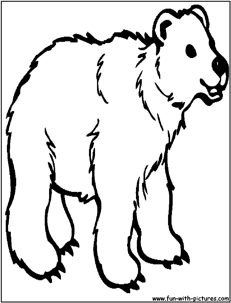 Grizzly Bear Coloring Pages | Panarukan Colors | 1050x800